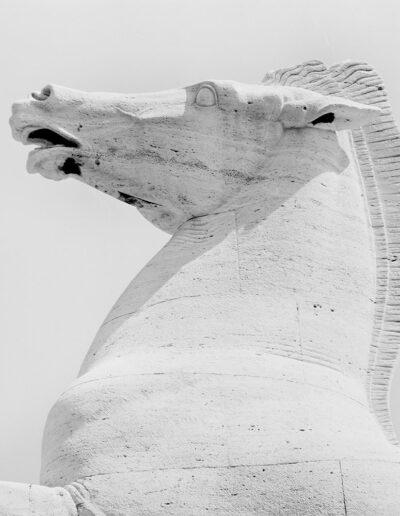 Dioscuro, cavallo del Morbiducci - EUR
